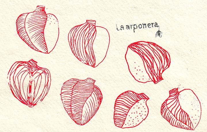 Nuevo sitio de web de La Arponera